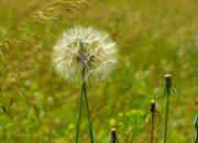 Hãy cảm nhận về 13 câu thơ đầu bài thơ Vội vàng của nhà thơ Xuân Diệu