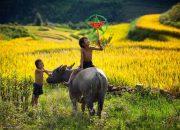 Anh chị hãy soạn bài Đất nướccủa tác giả Nguyễn Đình Thi